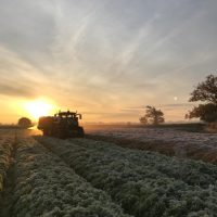 Laying straw on carrots November 2019 – photo courtesy of Jake