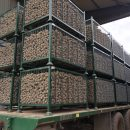 Organic Triplo Seed Potatoes – all ready for planting.