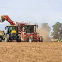 Harvesting Potatoes 2020