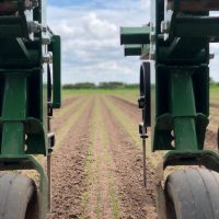 Weeding Carrots 2019 – photo courtesy of Jim.