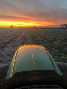 Laying straw Nov 2019 - photo courtesy of Jim